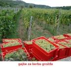 gajba za grožđe